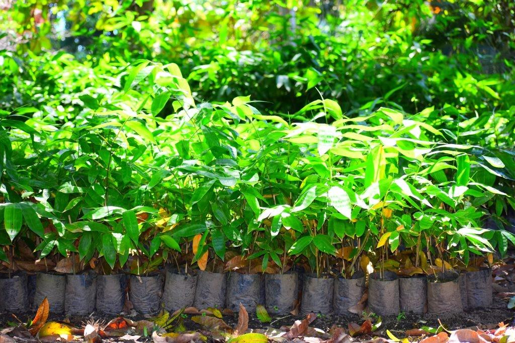 www.forestbambu.com543DSC0784-1024x683